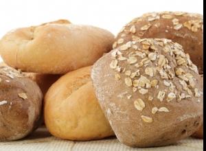 Hongos: Vida del Pan