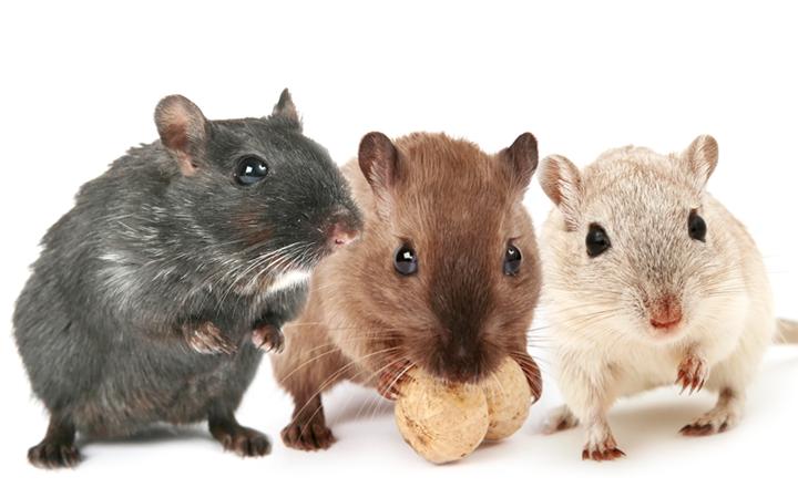 Control de roedores: Calidad en productos que aseguran ventas